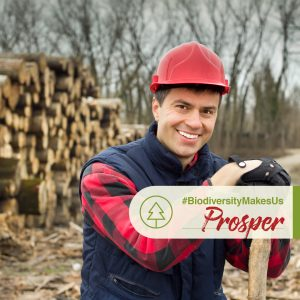 OBC-IDB2017-Forests-Produce