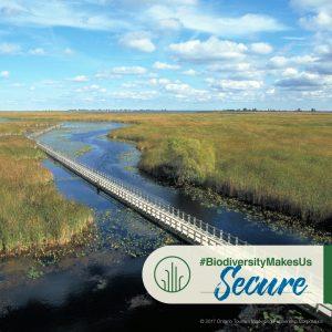 OBC-IDB2017-Wetlands-Produce